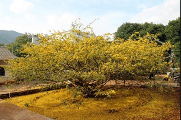 Mỗi mùa ở Đồng Nai đều có nét đẹp riêng