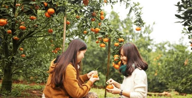Bạn tha hồ thưởng thức trái cây ngon tại vườn Long Khánh