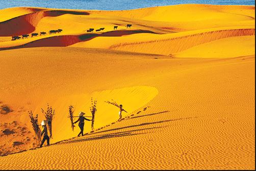 Vẻ đẹp lạ lẫm ở đồi cát