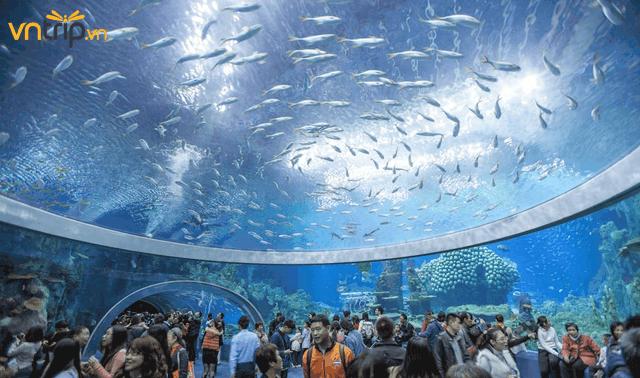 Với hàng nghìn mẫu sinh vật biển (Ảnh: Sưu tầm)