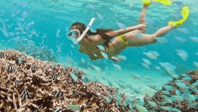 Ngắm rạn san hô đẹp tại Côn Đảo
