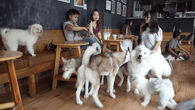 Thiết kế quán cafe thú cưng độc đáo, mới lạ.