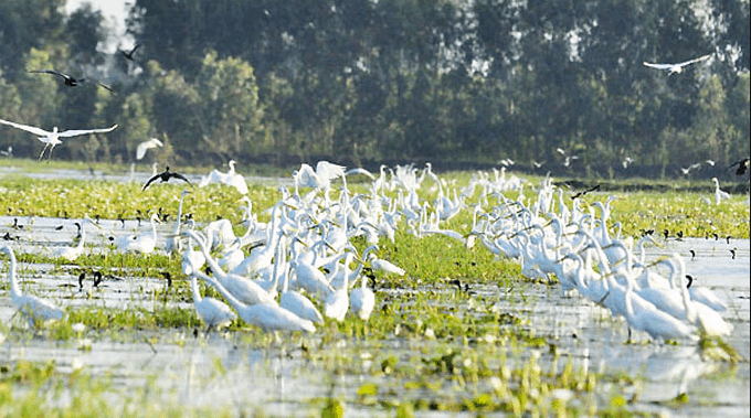 Hệ sinh thái đa dạng tại Láng Sen