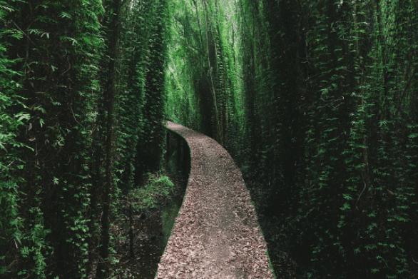Con đường chạy xuyên rừng tràm bạt ngàn