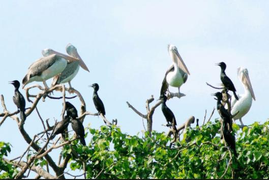 Vườn chim Bạc Liêu là nơi sinh sống của rất nhiều loài thực vật và động vật