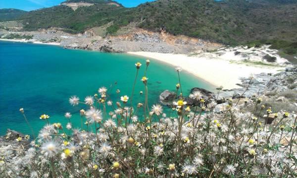 Nước biển ở đây có màu xanh như màu lá chuối (Ảnh ST)