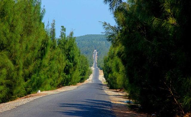 Con đường dẫn đến làng chài với rặng dương xanh tốt hai bên (Ảnh ST)