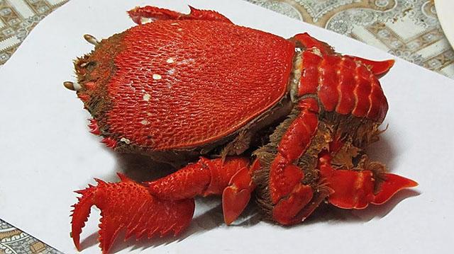 Thịt cua huỳnh đế cực kì ngon, thơm, thịt rất chắc, độ đạm cao có trong thịt cua khiến món ăn này trở nên vô cùng bổ dưỡng (Ảnh ST)