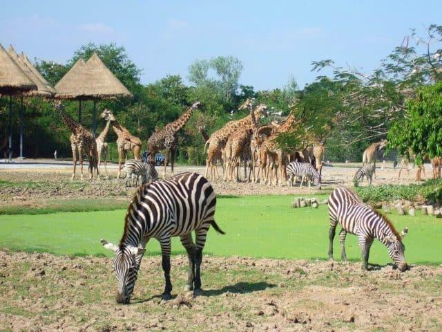 Safari World Bangkok (Ảnh ST)