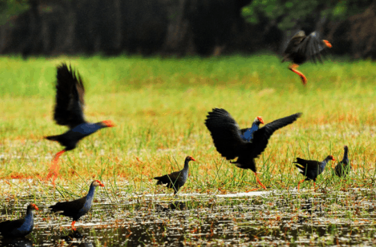 Tại KDL Gáo Giồng có nhiều loài chim khác nhau