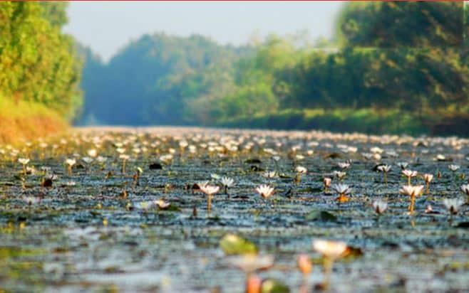 Kết quả hình ảnh cho Vườn quốc gia Tràm Chim