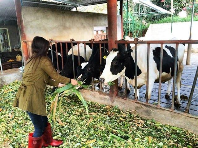 Những trải nghiệm thú vị tại trang trại (Ảnh ST)