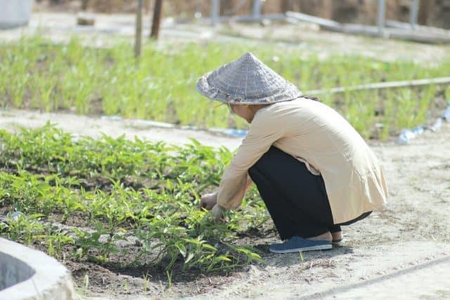 Thực phẩm ở đây hầu hết đều được tự hái trồng nên đảm bảo an toàn lành mạnh. (Ảnh: ST)