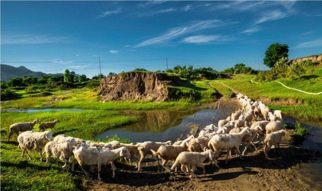 Kết quả hình ảnh cho Đồng Cừu An Hoà