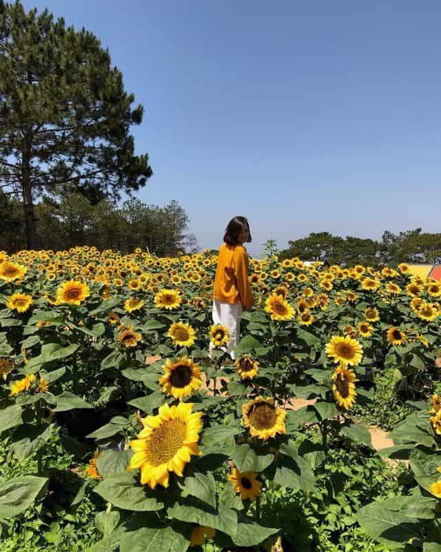 Sunny Farm Đà Lạt (Ảnh: ST)