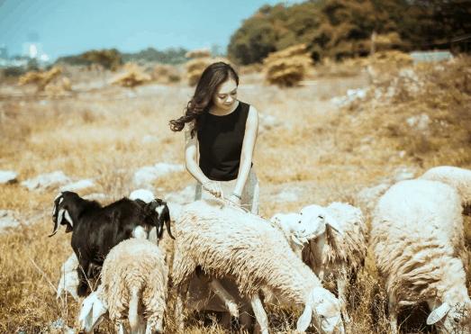 Nắng càng lên cao, đồng cừu càng lung linh trong ánh vàng! (ảnh ST)
