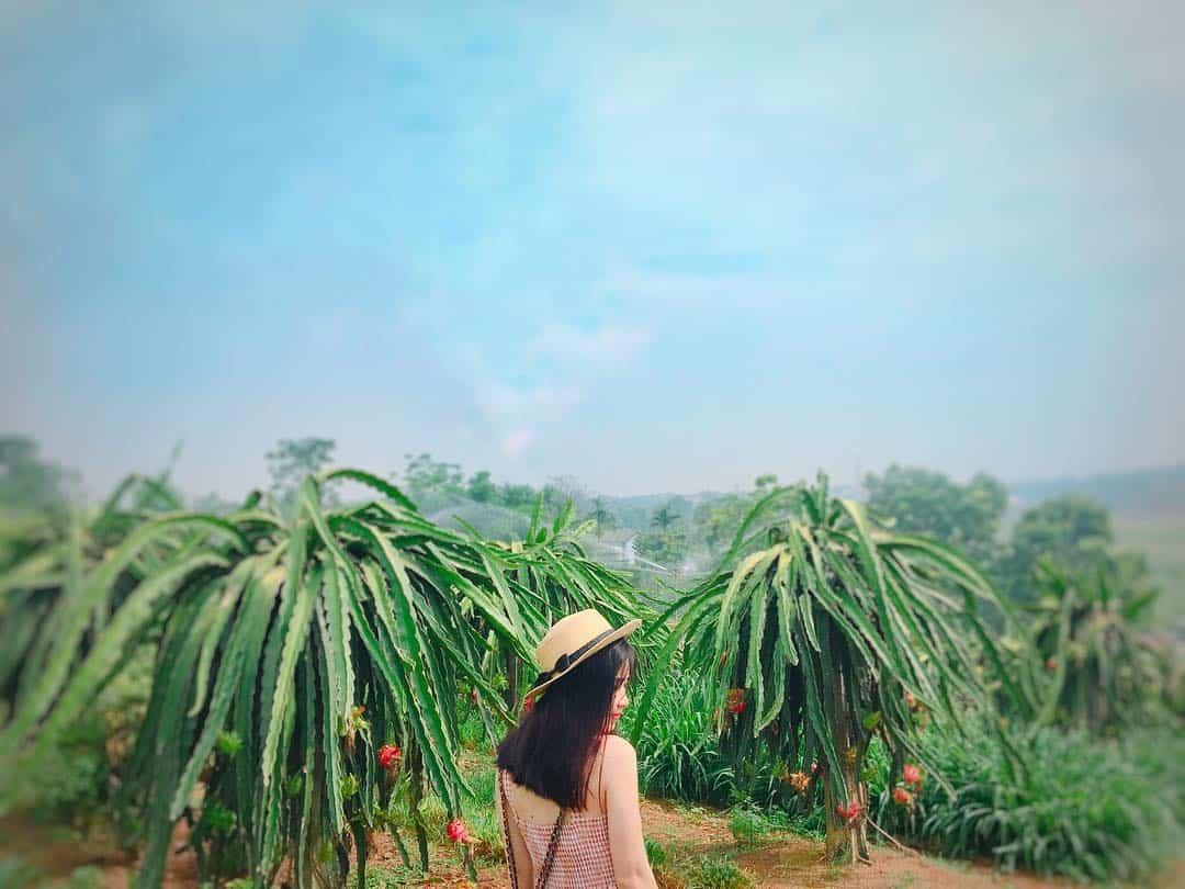 vườn thanh long bình thuận