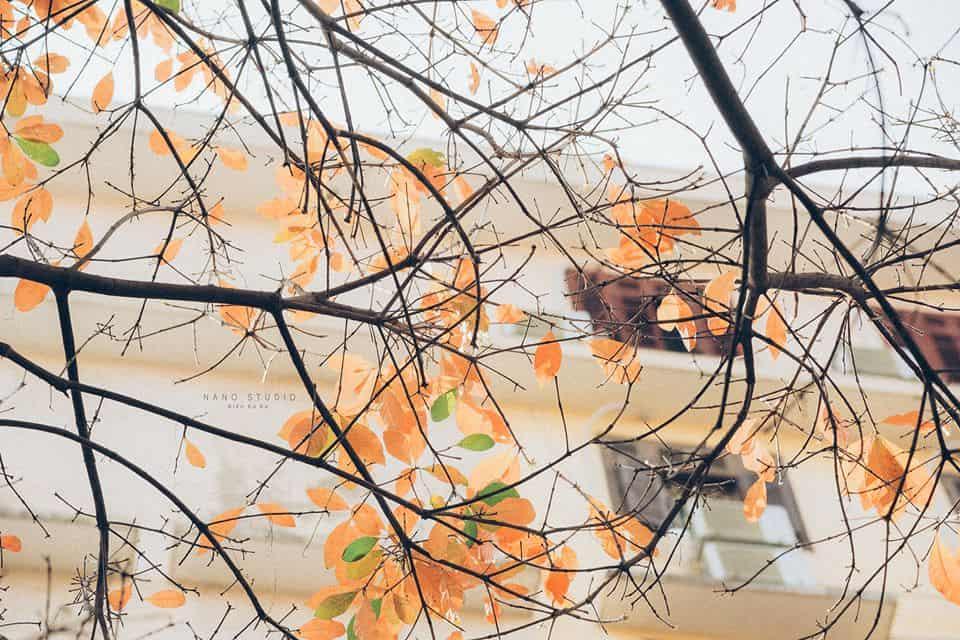 hà nội mùa thay lá