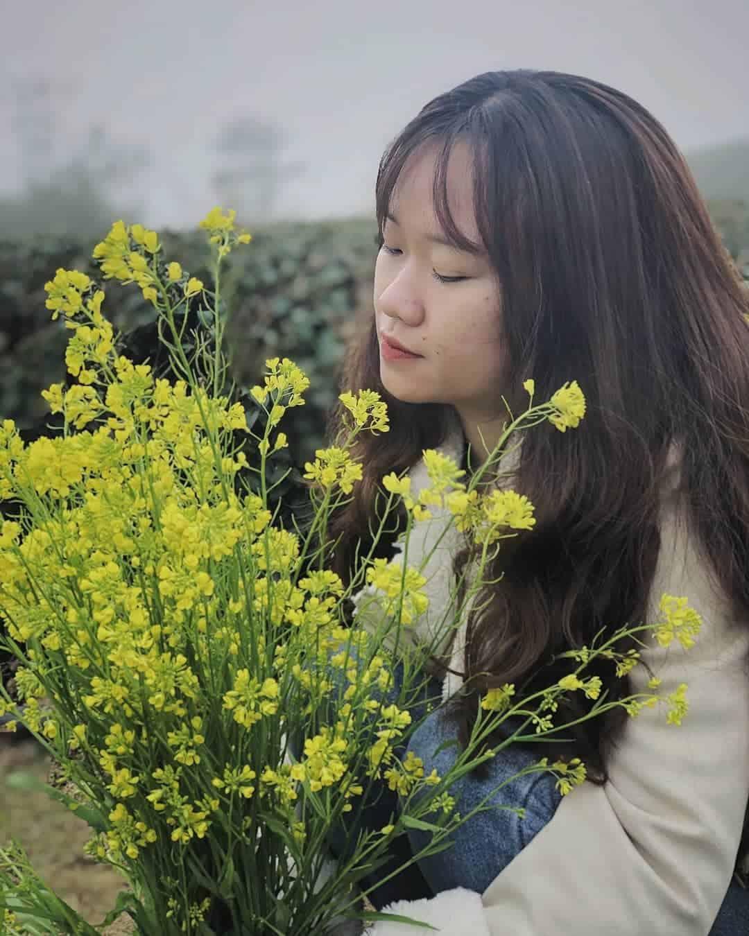 Hoa cải Đà Lạt