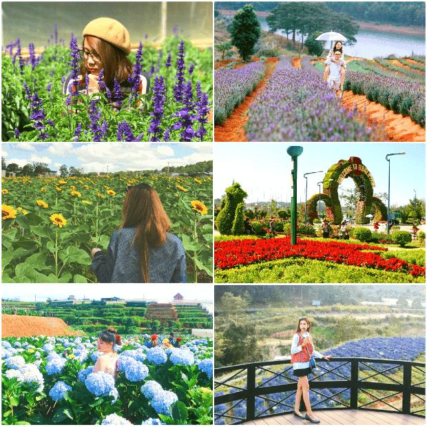 Không thể không ghé thăm các vườn hoa khi đi du lịch Đà Lạt